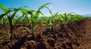 Agricultura Industrial III